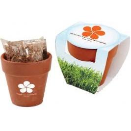 Terracotta Pot w/Seeds